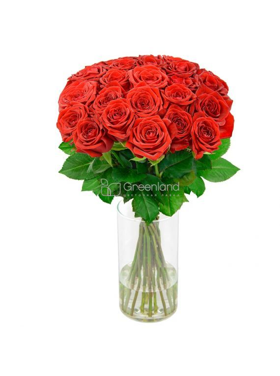 №12 35 red roses mono bouquet S