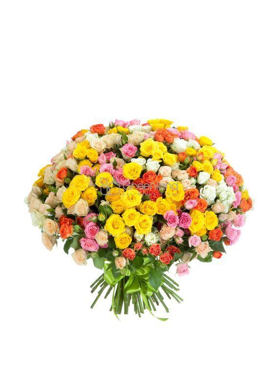 №205 Букет из 75 спрей роз