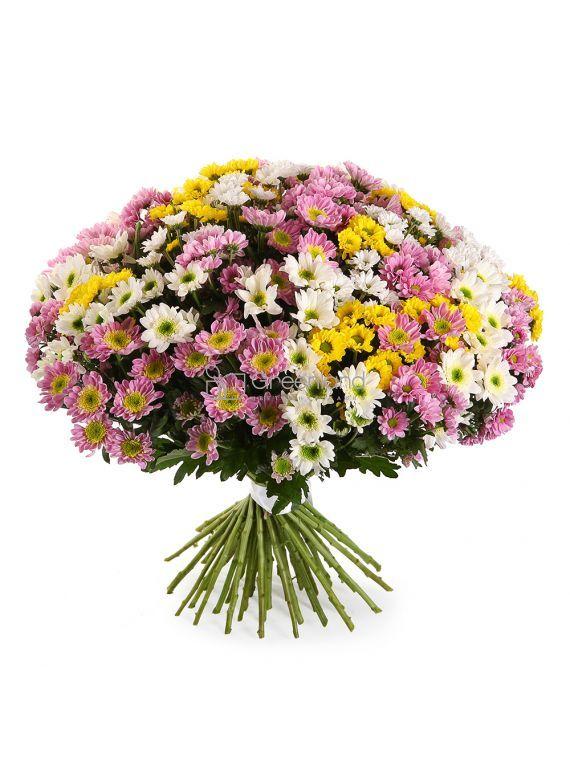 №250 Букет микс из 51 хризантемы