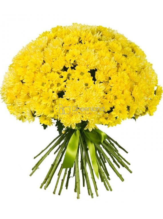 №553 Bouquet of 35 yellow  chrysanthemums